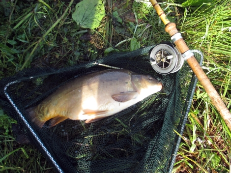 Picture of a double figure Mirror Carp in landing net along side and Edgar Sealey split cane fishing rod and vintage Allcocks Aerial Popular reel