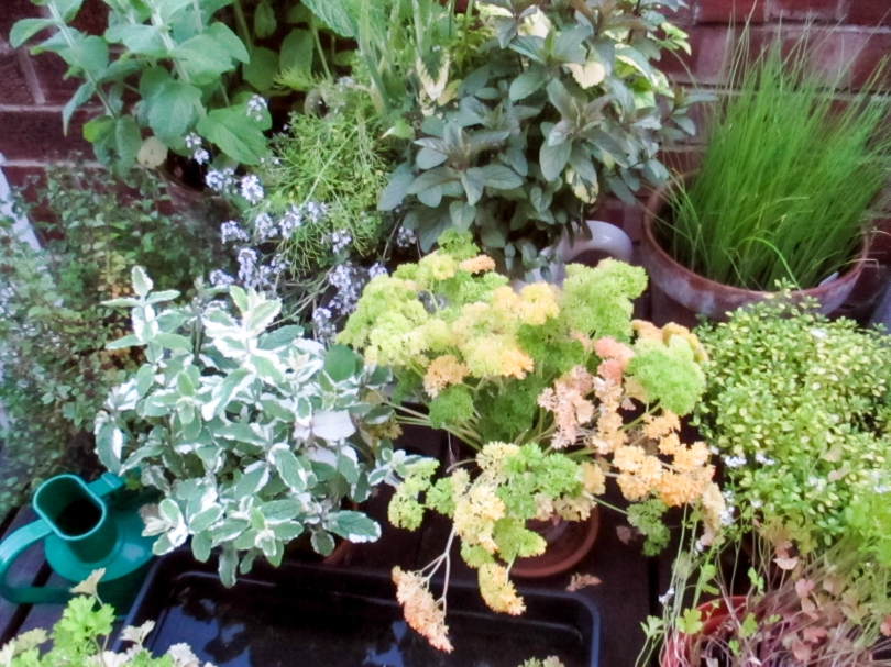 Picture of a giant tea cup planted up with a number of various herbs