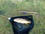 Picture of a double figure Common Carp in a vintage landing net along side a mark iv split cane vintage rod