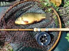 Picture of a Crucian Carp in a vintage Ash loop landing net with a Mark IV split cane fishing rod and Allcocks Aerial Popular fishing reel