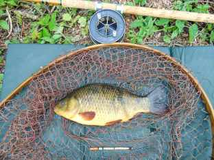 Picture of a Crucian Carp in a vintage Ash loop landing net with a split cane Edgar Sealey fishing rod and Allcocks Aerial Popular fishing reel.