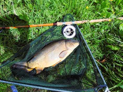 Picture of a double figure Mirror Carp in a vintage landing net with a split cane Fred J Taylor fishing rod and Allcocks Aerial Popular fishing reel