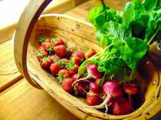 Picture of bunch of radish and strawberries in a wooden trug
