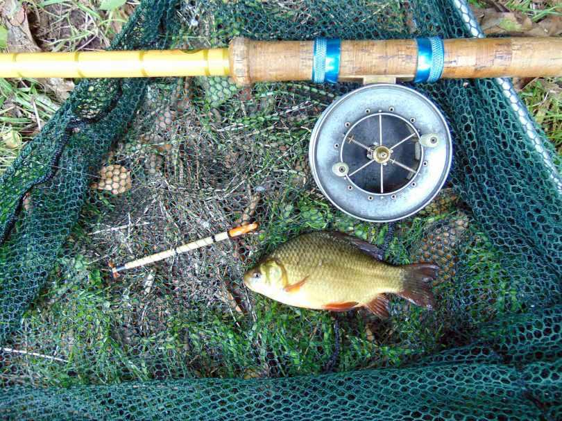 Picture of a Crucian Carp in a vintage landing net along side a split cane fishing rod