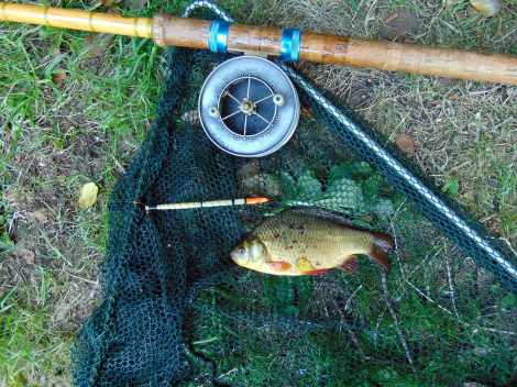 Picture of a Crucian Carp in a vintage landing net along side a split cane fishing rod