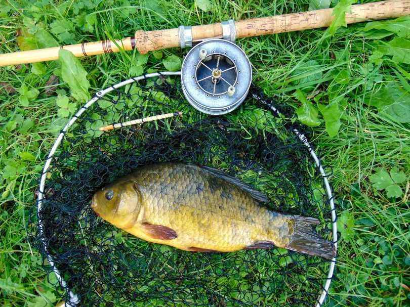 Picture of a Crucian Carp with an Edgar Sealy Floatcaster rod, Allcocks Popular Aerial reel and vintage landing net