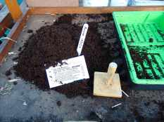 Picture of a packet of Ailsae onion seeds next to a mound of compost on a potting bench in a greenhouse