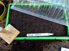 Picture of a seed tray with cover and seed label
