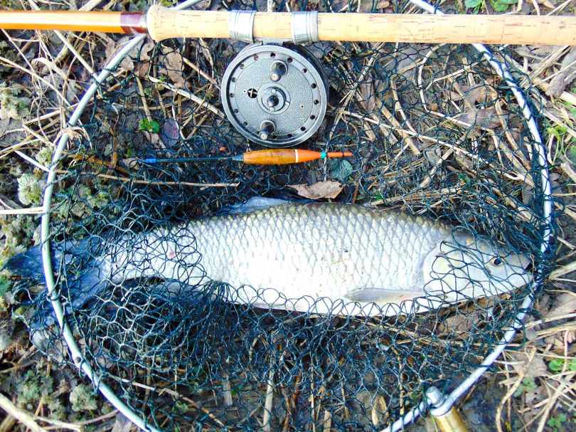 Picture of a Chub in a vintage landing net along with a Rapidex fishing reel mounted on a Fred J. Taylor split cane fishing rod
