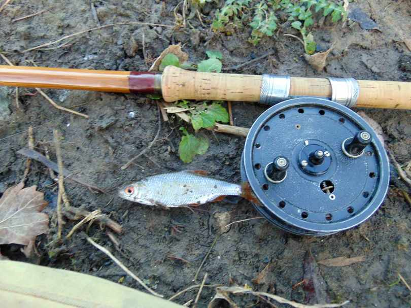 Picture of a small Roach with a Fred J Taylor split cane fishing rod and vintage Rapidex reel
