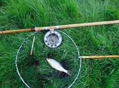 Picture of a Roach in a vintage landing net with a Fred J Taylor split cane fishing rod a quill float and an Allcocks Aerial vintage fishing reel