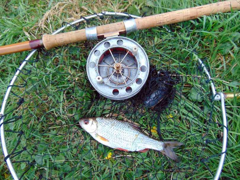 Picture of a Roach in a vintage landing net with a Fred J Taylor split cane fishing rod