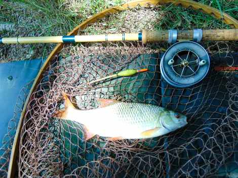 Picture of a Roach with quil float in a vintage landing net