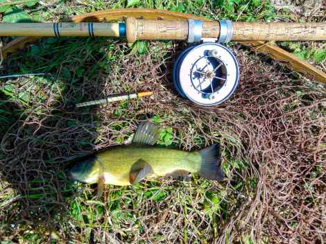 Picture of a small green tench in a vintage landing net
