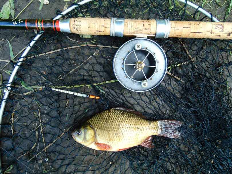 Picture of a crucian carp in a vintage landing net