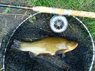 Picture of a Tench in a vintage landing net alongside a vintage cane R Sealey fishing rod and Allcoak Aerial three inch Popular Reel.