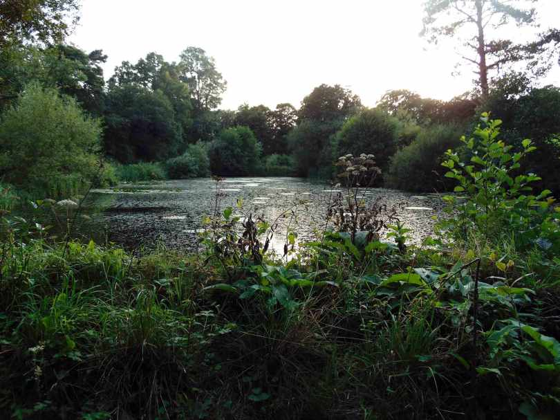Picture of an overgrown pond