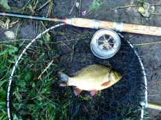 Picture of a Crucian Carp in a vintage landing net alongside an R Sealey cane fishing rod and Allcock Aerial Popular three inch reel.
