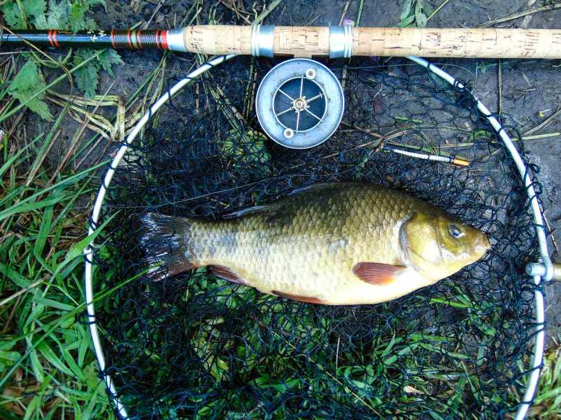 Picture of a large Crucian Carp in a vintage landing net alongside an R Sealey cane fishing rod and Allcock Aerial Popular three inch reel.