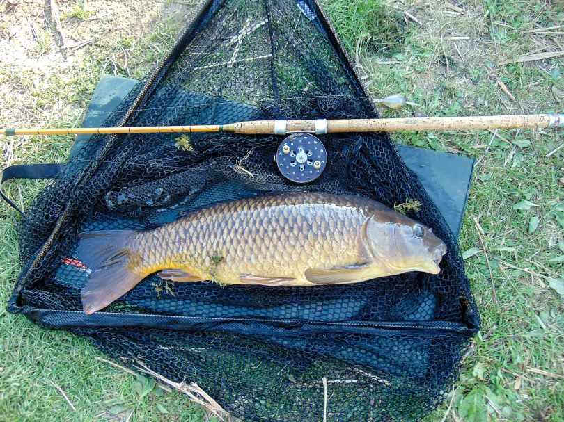 Common Carp on landing net with rod and reel